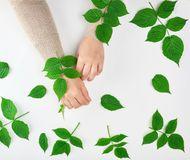 dos manos femeninas y hojas verdes, visión superior, concepto de procedimientos antienvejecedores foto de archivo libre de regalías