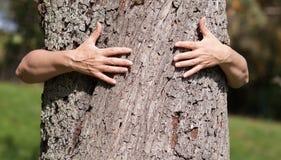 Dos manos que abrochan un verano del árbol Foto de archivo libre de regalías