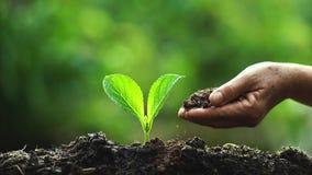 Dos manos que crecen una planta verde joven metrajes