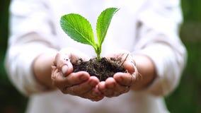 Dos manos que crecen una planta verde joven almacen de metraje de vídeo