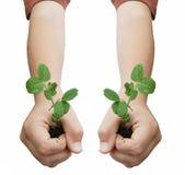 Dos manos que sostienen las plantas Imagenes de archivo