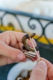 Dos manos que sostienen un caracol cocinado como bocado y que escogen la carne fuera de casa del caracol con el palillo, Marrakes fotografía de archivo libre de regalías