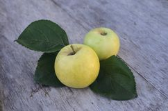 Dos manzanas amarillas grandes mienten en una tabla de madera vieja al aire libre Imagen de archivo libre de regalías