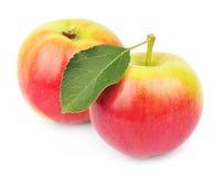 Dos manzanas con las hojas Imágenes de archivo libres de regalías