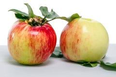 Dos manzanas con las hojas Fotos de archivo libres de regalías