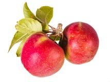 Dos manzanas con las hojas Foto de archivo libre de regalías