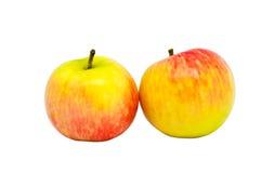Dos manzanas maduras Imágenes de archivo libres de regalías