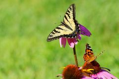 Dos mariposas en las flores con el espacio verde abierto del fondo foto de archivo libre de regalías