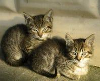 Dos mentiras hermosas de los gatitos, del gatito y del gato y se sientan cerca de la pared Foto de archivo