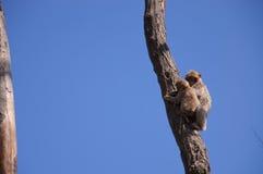 Dos monos en un árbol imágenes de archivo libres de regalías