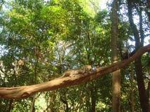Dos monos en un árbol en el bosque Imagen de archivo