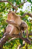 Dos monos están en el árbol imagen de archivo libre de regalías