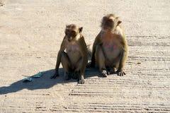 Dos monos que se sientan en el piso Fotos de archivo