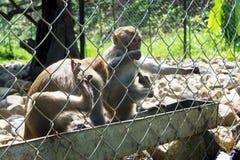 Dos monos que se sientan en la jaula del parque zoológico beben el agua Imagen de archivo