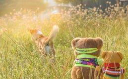 Dos muñecas del oso en la posición sentada en el jardín, mirada como están mirando el perro Fotos de archivo