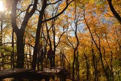 Dos muchachas caminan en una escalera de madera en el parque debajo de árboles amarillos imagen de archivo