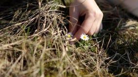 Dos muchachas en el campo recogen las flores salvajes Carrocería parts metrajes