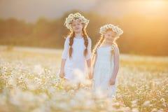 Dos muchachas lindas del niño en el campo de la manzanilla Fotografía de archivo libre de regalías