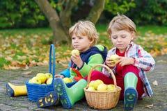Dos muchachos adorables del niño que comen manzanas en el jardín del hogar, hacia fuera Imágenes de archivo libres de regalías