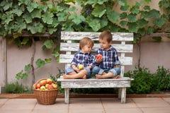 Dos muchachos, comiendo manzanas Imagen de archivo libre de regalías
