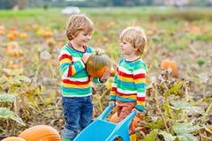 Dos muchachos de los niños que escogen las calabazas en remiendo de la calabaza de Halloween o de la acción de gracias Fotografía de archivo libre de regalías