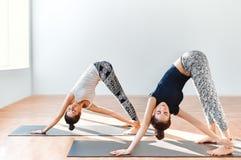 Dos mujeres jovenes que hacían asana de la yoga giraron el perro boca abajo Fotografía de archivo