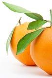 Dos naranjas frescas Fotografía de archivo libre de regalías
