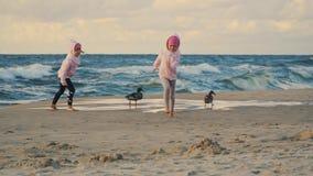 Dos niñas adorables son que funcionan con y de alimentaciones de patos en una playa arenosa metrajes