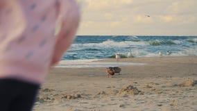 Dos niñas adorables son que funcionan con y de alimentaciones de patos en una playa arenosa almacen de video