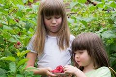Dos niñas en los arbustos de frambuesas fotografía de archivo