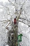 Dos nidal en árbol de abedul helado Imagen de archivo libre de regalías