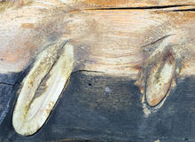 Dos nudos Imagen de archivo libre de regalías