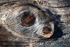 Dos nudos en la madera Fotografía de archivo