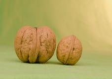 Dos nueces grandes y pequeñas Imagen de archivo