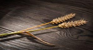 Dos oídos maduros del trigo en una tabla de madera Triticum aestivum imagen de archivo