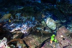Dos Ojos de Cenote Fotos de Stock