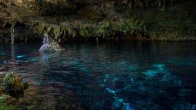 DOS Ojos de Cenote Imagen de archivo libre de regalías