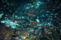 Dos Ojos de Cenote Fotografia de Stock
