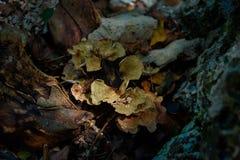 DOS Ojos di Cenote Fotografie Stock Libere da Diritti
