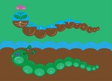 Dos orugas y etapas de desarrollo de una flor Imágenes de archivo libres de regalías