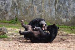 Dos osos fotos de archivo libres de regalías