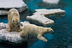Dos osos Fotografía de archivo