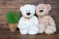 Dos osos de peluche Fotos de archivo libres de regalías