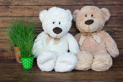 Dos osos de peluche Imagen de archivo libre de regalías