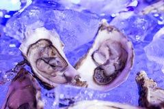 Dos ostras en el hielo Fotos de archivo