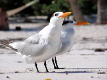 Dos pájaros foto de archivo