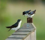 Dos pájaros fotos de archivo libres de regalías