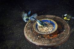 Dos pájaros azules y un verdes en un plato de alimentación Fotos de archivo
