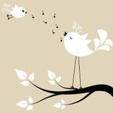 Dos pájaros blancos en una rama Fotografía de archivo libre de regalías