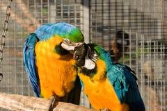 Dos pájaros del amor Imágenes de archivo libres de regalías